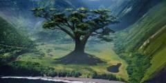 one-tree-3